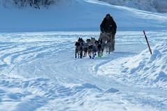 _ROS5122-Edit.jpg (Roshine Photography) Tags: dogteam yukonquest yukonriver musher snow environmental ice dawsoncity yukon canada ca