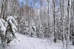Un jour d'hiver, alors que la forêt était recouverte d'un manteau blanc_3 (Excalibur67) Tags: nikon d750 sigma globalvision art 24105f4dgoshsma forest foréts arbres trees nature neige snow blanc winter white hiver