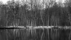 'Sticks & Tones' (Bob's Digital Eye 2) Tags: blackandwhite bobsdigitaleye bobsdigitaleye2 canon canonefs55250mmf456isstm flicker flickr lakescape reflections snow t3i trees water winter winterinmn woodsforests monochrome