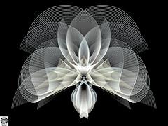 054_00-Apo7x-190206-5 (nurax) Tags: fantasia frattali fractals fantasy photoshop mandala maschera mask masque maschere masks masques simmetria simmetrico symétrie symétrique symmetrical symmetry spirale spiral speculare apophysis7x apophysis209 sfondonero blackbackground fondnoir