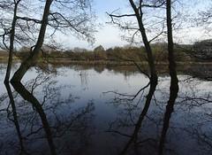 More water than meadow (Phil Gayton) Tags: water tree grass reed sky reflection river hems dart snipe island totnes devon uk