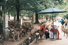 King of the Deer (GingerKimchi) Tags: nara osaka japan travel nature asia film 35mm fujifilm canon deer canona1 2019 spring february march