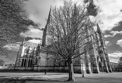Salisbury cathedral (Shane Jones) Tags: salisburycathedral salisbury cathedral church building architecture tree spire nikon d810 nikon1424mm wiltshire