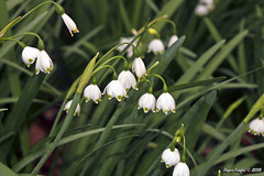 IMG_5616 (Roger Kiefer) Tags: dallas arboretum flowers outdoors beauty nature