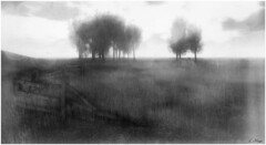 Morning Mist (Loegan Magic) Tags: secondlife landscape fog fence tree sky grass field mistfog