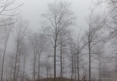 Magla na Učki (MountMan Photo) Tags: učka istra primorskogoranska croatia šuma forest magla fog landscape zima winter flickrunitedaward
