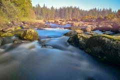 Bellever Forest (stevedamerell200) Tags: dartmoor landscapes bellever longexposure
