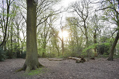 In the woods (DreamEstel) Tags: woods sun nature trees green highgate breathtaking outdoor plant spring awake london nikon