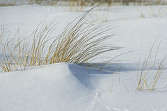 touch of winter (TAC.Photography) Tags: snow winter dunegrass 2019