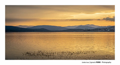 Golden hour (Ignacio Ferre) Tags: manzanareselreal madrid españa spain embalsedesantillana embalse reservoir lago lake agua water landscape paisaje amarillo dorado golden gold nikon naturaleza nature sunset atardecer