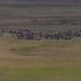 Cape Buffalos and Wildebeest