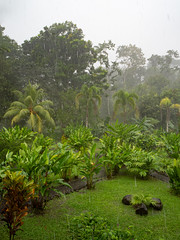 Rainforest (wwarby) Tags: centralamerica costarica abroad garden holiday holiday2018costarica outdoors plant rain storm tree vacation weather