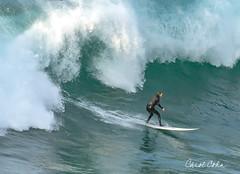 _D191048-surfer-L (Carol Cohn) Tags: surf surfing waves ocean lajolla surfboard