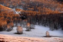 Trees (MelindaChan ^..^) Tags: innermongolia china 内蒙古 snow white 雪 tree plant nature chanmelmel mel melinda melindachan 冰 bashang 壩上