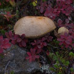 Lapland_Day2_Muonio_20180911_IMGS4754_s (Andrew-Holloway) Tags: lapland muonio autumn torassieppi