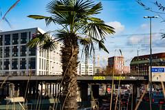 frosthart (Rasande Tyskar) Tags: hamburg street strase view streetview city stadt ost west brücke bridge palm palme palmtree