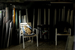 .. s .. (Panagiotis Feloukas) Tags: cat store color blonde sunlight direct chair chairs shadows