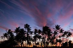 Sunset Through Palms (Daren Grilley) Tags: 23mm xt2 fuji fujifilm palmtree bigisland paradise island sunset waikoloa hawaii ʻanaehoʻomalu anaehoomalu bay lava beach club llbc