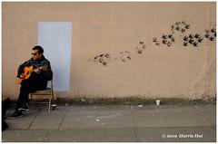 The Birds Come - Commercial Drive XT6530e (Harris Hui (in search of light)) Tags: harrishui fujixt1 digitalmirrorlesscamera fuji fujifilm vancouver richmond bc canada vancouverdslrshooter mirrorless fujixambassador xt1 fujixcamera fujixseries fujix fujixf35mmf2 fujiprimelens fixedlens standardlens commercialdrive thedrive street streetphotography joescoffee mural wall guitarist musicplaying streetmusic