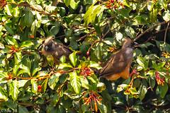 0I7A9016.jpg (Murray Foubister) Tags: africa gadventures spring birds tanazania flora travel 2018