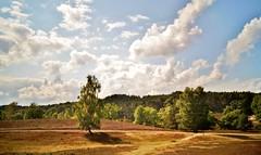 (farmspeedracer) Tags: nature 2018 september heath landscape sky cloud forest tree germany heat summer