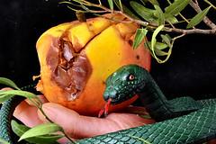 Forbidden Fruit (jopperbok) Tags: jopperbok wah werehere hereios serpent apple eden christianity sinn snake hand adam eve tree knowledge bible genesis god believe faith fruit food rotten garden paradise