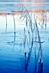 Ice (Stefano Rugolo) Tags: stefanorugolo pentax k5 pentaxk5 smcpentaxm100mmf28 kmount ricohimaging ice water lake reeds blue sunset manualfocuslens manualfocus manual vintagelens reflection