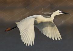 87686056ss (TARIQ HAMEED SULEMANI) Tags: sulemani tariq tourism trekking tariqhameedsulemani winter wildlife wild birds nature nikon