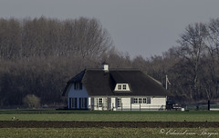 Huis aan de Nathalsweg (Hank) (Eduard van Bergen) Tags: brabant dijk dike field tele meadow holland nederland netherlands bas pays dutch building polder land grass bush outdoor heusden altena biesbosch landscape trees house haus sky serene remote family haushalt lifestock horizon birds cottage rural lodge landhouse farm estate landhuis hank nathalsweg jeppegatweg bild picture photograph still fujifilmxe1 xc50230oisii rand crop shot