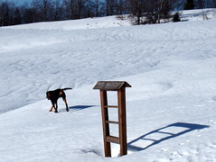 árnyék / shadow (debreczeniemoke) Tags: tél winter hó snow túra hiking hegy mountain gutin gutinhegység gutinmountains kutya dog erdélyikopó transylvanianhound frakk árnyék shadow olympusem5