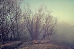 alberi del fiume (fabrizio daminelli ) Tags: alberi trees paesaggio landscape fog nebbia fiume river bosco forest canon fabriziodaminelli