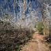 Primavera -poligono-