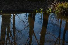 Riflessi... (paolo-p) Tags: alberi trees acqua water riflessi reflections boscoromagno spessa