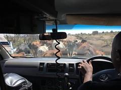 IMG_1663 (suuzin) Tags: masai mara safari