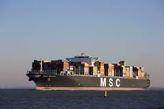 MSC KALINA (angelo vlassenrood) Tags: ship vessel nederland netherlands photo shoot shot photoshot picture westerschelde boot schip canon angelo walsoorden cargo container msckalina m2