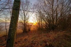 Herbst Bayerischer Wald (MikeSolfrank) Tags: herbst berg wald bäume sonnenuntergang sonne laub bayern bavaria outside nature light art sky winter