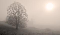 Entre rêve et réalité (Evim@ge) Tags: grésivaudan sunrise leverdesoleil brume mist misty brouillard fog foggy hiver winter arbre tree paysage lanscape soleil sun light lumière lighty lumineux