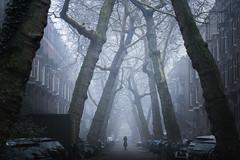 Stranger Things (albert dros) Tags: 15years albertdros amsterdam strangerthings horror scifi mist fog city trees travel