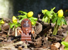 Winterlinge (captain_joe) Tags: toy spielzeug 365toyproject lego series14 minifigure minifig bigfoot winterling