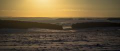 snow day sunset (Redheadwondering) Tags: sonyα7ii snow salisburyplain wiltshire winter landscape trees minolta minolta100200mm sunset