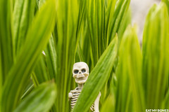 Hiding in the green in the Mercantour (french Alps) (EatMyBones) Tags: figurine mercantour miniature nature poseskeleton rement skeleton snow toy toyphotography