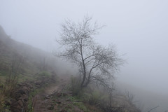 self portrait (kalinion) Tags: mountain grancanaria spain natureza bewiahn natura path coth fog