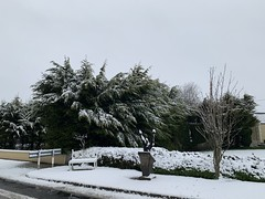 Snow Day - March 3, 2019 - County Cork, Ireland (firehouse.ie) Tags: countryside countycork snowscape tree march2019 ireland wintery trees nature snowing snow