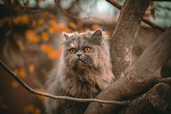 May (SmurfManX) Tags: mammal animals wild tree focus foreground one animal wildlife branch vertebrate portrait looking at camera no people primate day closeup plant whisker cat may