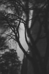 20190320-243 (sulamith.sallmann) Tags: pflanzen abend abends abendstimmung analogeffekt analogfilter baum berlin blur botanik bw deutschland düster effekt effekte europa filter finster folie folientechnik gesundbrunnen kleverstrase mitte natur pflanze schwarzweis sw unheimlich unscharf sulamithsallmann