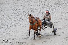 Hillion (Oric1) Tags: breizh france eos oric1 canon côtesdarmor 22 entrainement cheval jeanlucmolle brittany bretagne horse armorique hillion