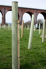 Tree planting, Whalley 03