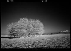 Scan 75 (Champy88) Tags: fujigw690 rolleiinfraredir400 rolleifilm 6x9 mediumformat formatomedio 120film 120 hc110 kodakhc110 scanviewscanmate5000 scanmate5000 escanerdetambor drumscanner film filmisnotdead blancoynegro blackandwhite noiretblanc analog landscape negative rollei
