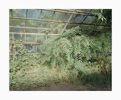 Cologne, 2018 (Darius Urbanek) Tags: 65mm analog 6x7 color film mediumformat mamiya7 germany cologne köln abandoned decay vegetation fujifilm pro400h 120
