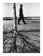 l'arbre renversé (Marie Hacene) Tags: palaisdetokyo paris arbre noir et blanc silhouette